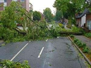 Wystarczy jedno zwalone drzewo, które przerwie linię wysokiego napięcia, żeby zostać bez prądu