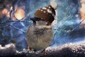 Zmarznięte zwierzęta zimą szukają schronienia i mogą niszczyć transformatory.